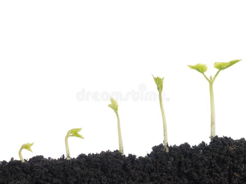 roślinność fotografia stock