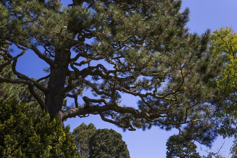 Roślinność i drzewa w japończyka ogródzie fotografia stock
