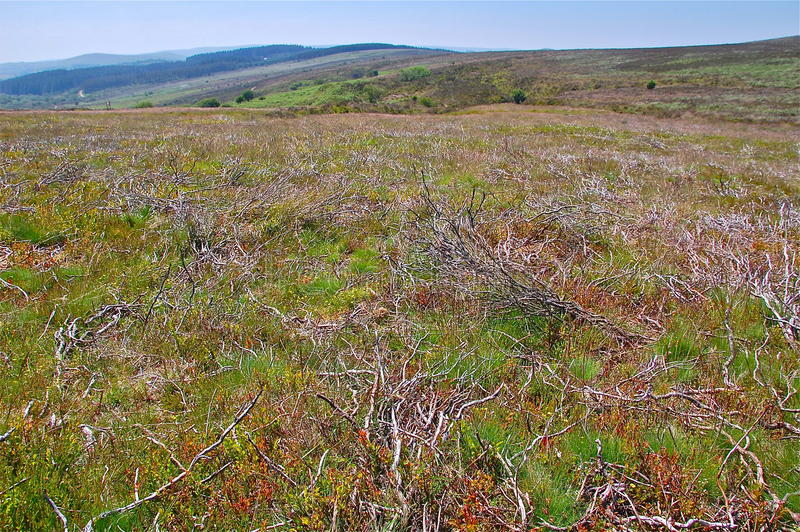 Roślinność na Dartmoor cumuje obraz stock
