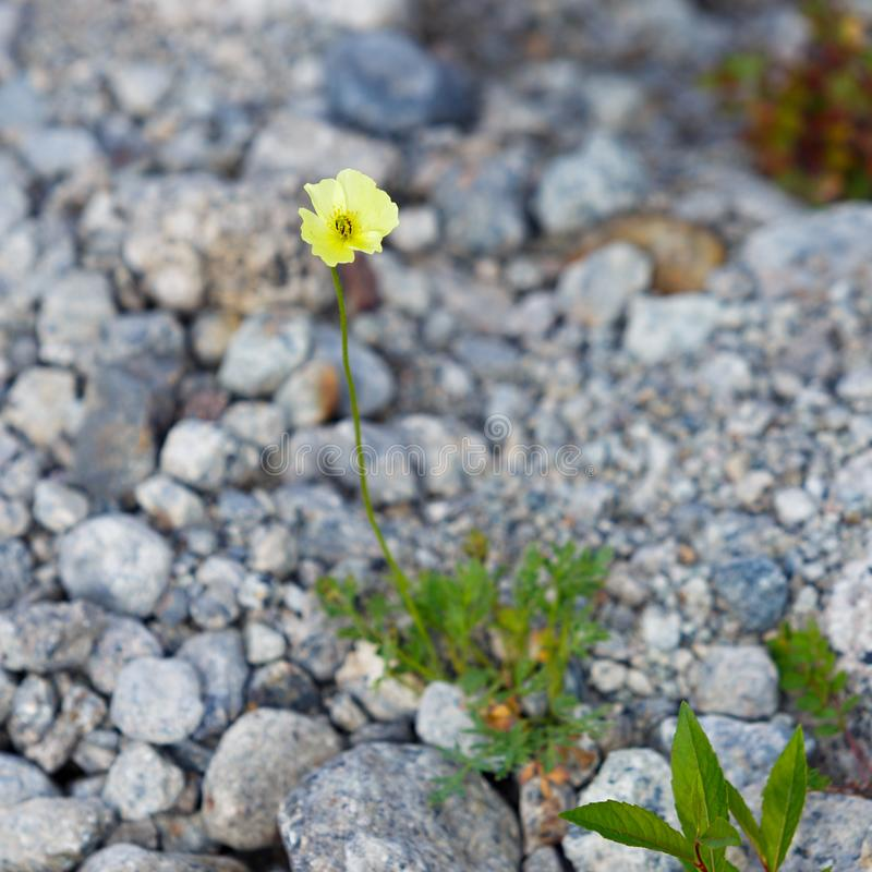 Roślinność tundra fotografia stock