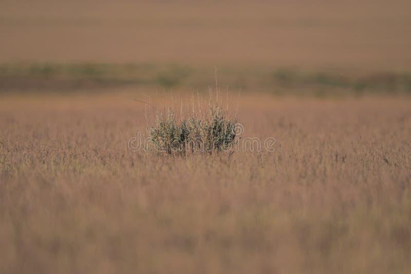 Roślinność w pustyni jar zdjęcia stock