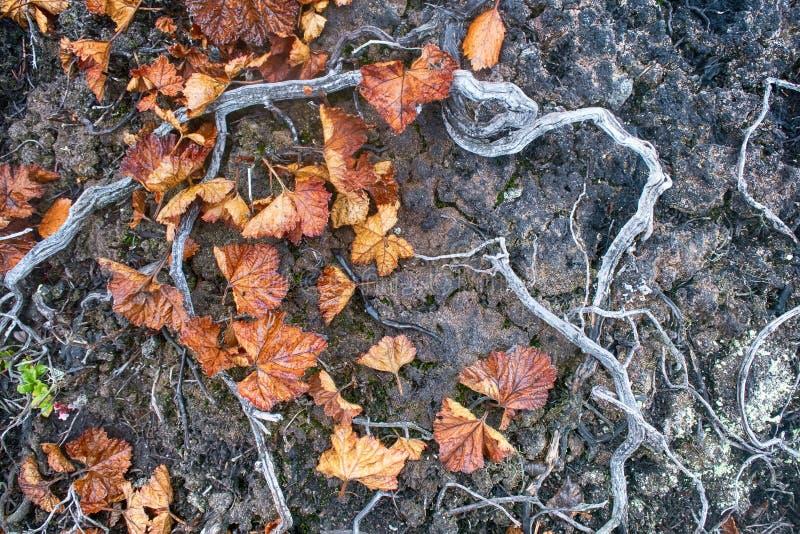 Rośliny śmierć, wylesienie obraz stock