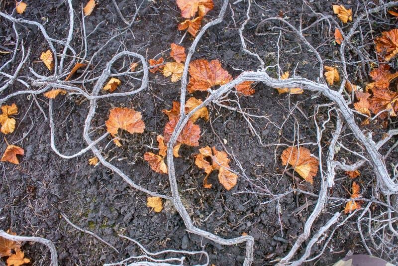 Rośliny śmierć, wylesienie fotografia royalty free