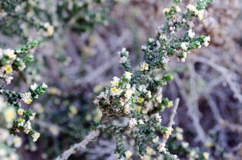 Rośliny Śródziemnomorski wybrzeże obraz stock