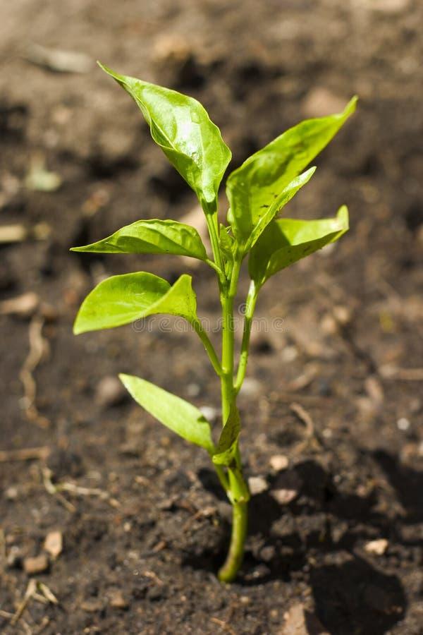 rośliny obraz royalty free