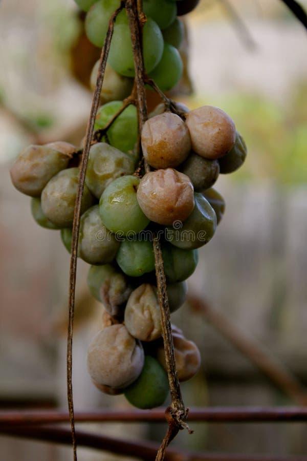 rośliny fotografia stock