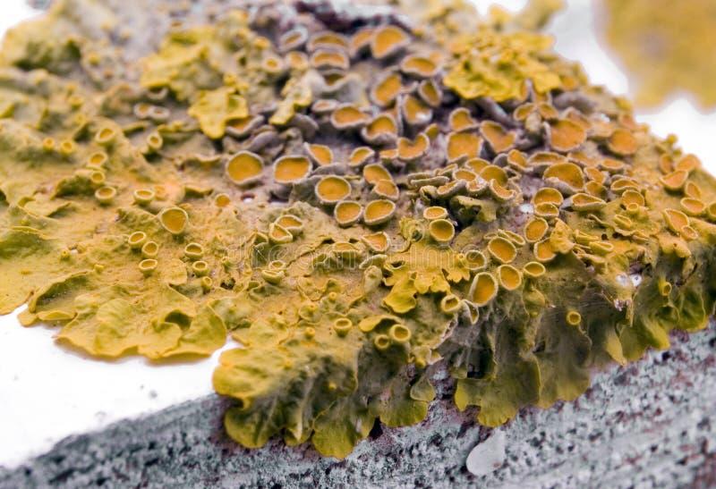 rośliny bakterii zdjęcie stock