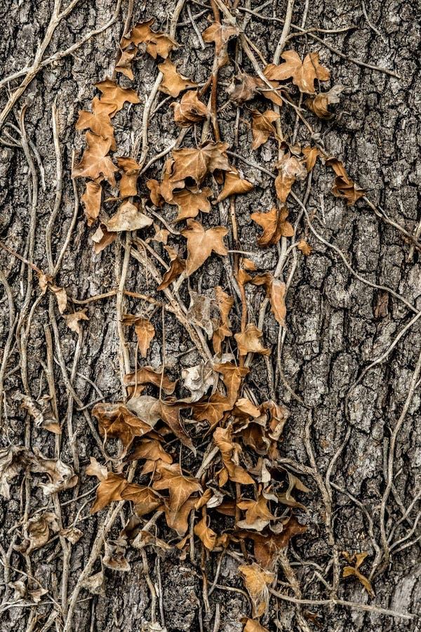 Rośliny barkentyna z liśćmi obrazy stock