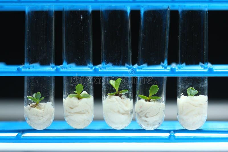 Rośliny biotechnologii Serie 3 obrazy stock