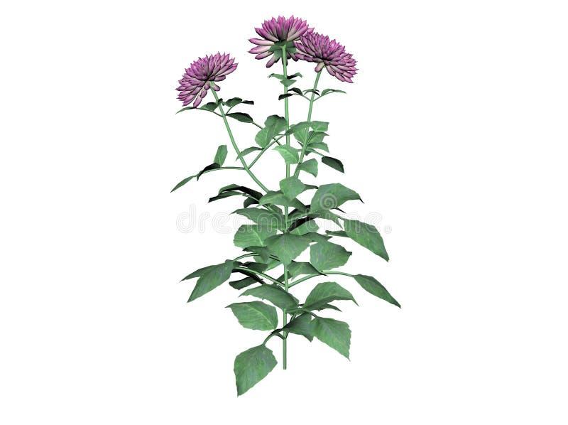 rośliny dahlię royalty ilustracja