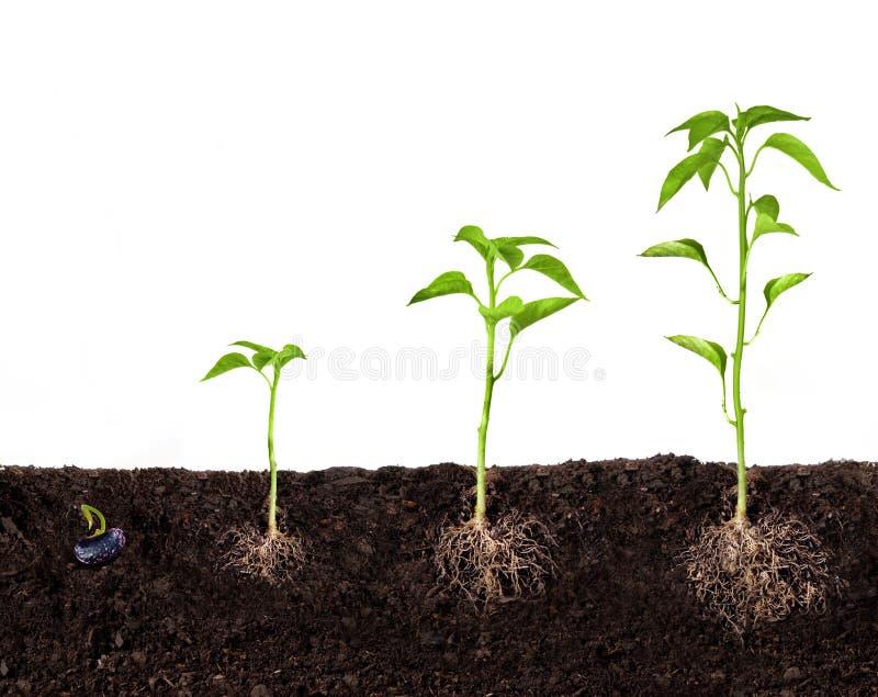 Rośliny dorośnięcie obrazy royalty free