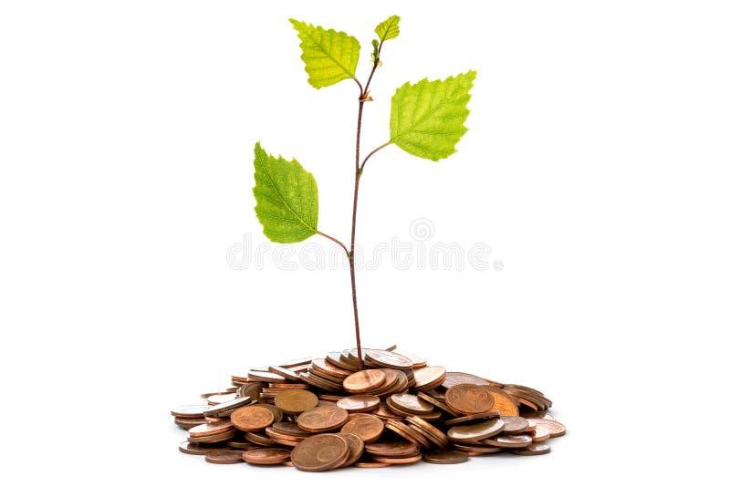 Rośliny dorośnięcie W moneta stosie fotografia royalty free