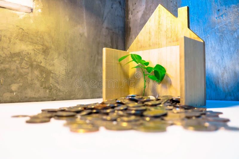 Rośliny dorośnięcie W Savings monetach obrazy stock