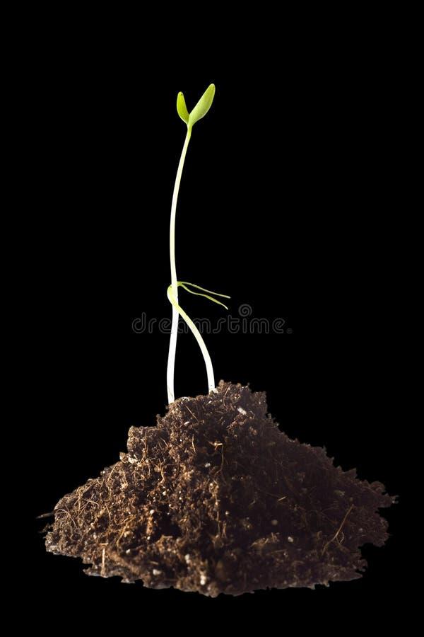 rośliny dwa obraz stock