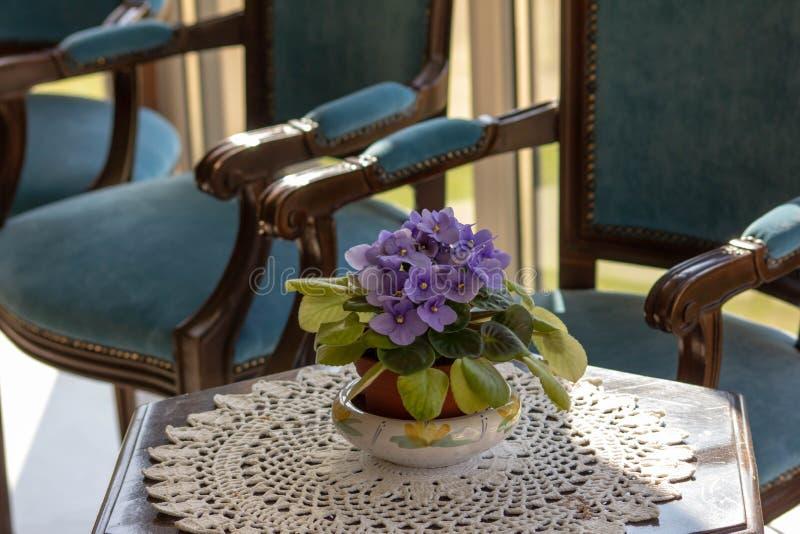 Rośliny fotografia na stole odpoczywa na upiększonym doily z swoboda stylu furnitur obraz stock
