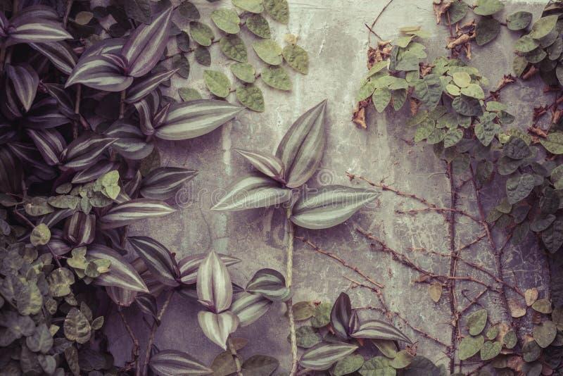 Rośliny i kamienna ściana obrazy royalty free