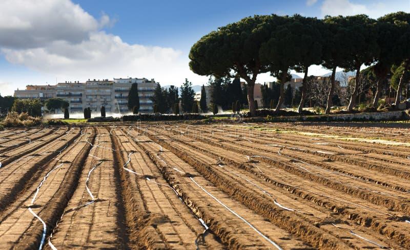 Rośliny i szklarnie na jardzie blisko chałup zdjęcie royalty free