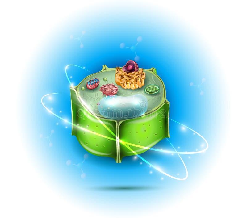 Rośliny komórki struktura royalty ilustracja