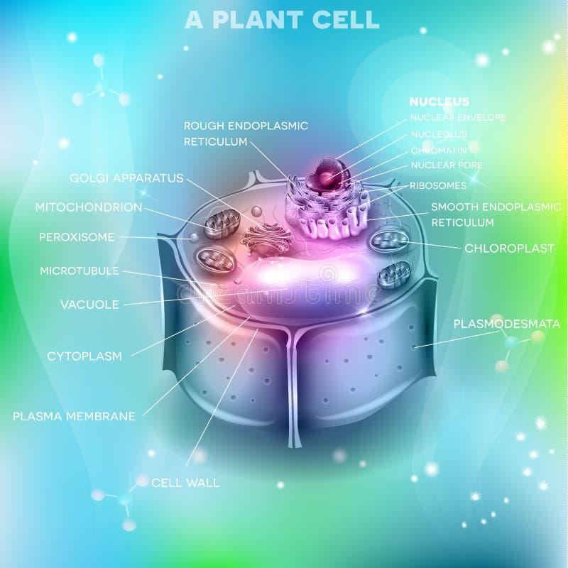 Rośliny komórki struktura ilustracja wektor