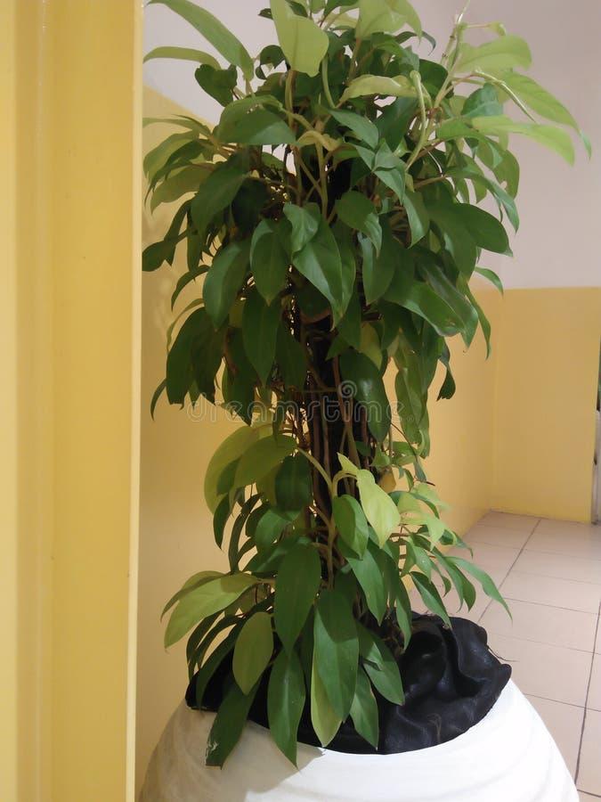 Rośliny które są dobre dla pokazu jako ornamentacyjne rośliny obraz royalty free