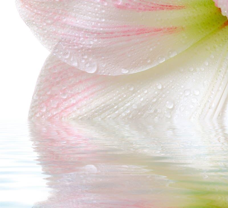 rośliny kwitnąca obraz royalty free