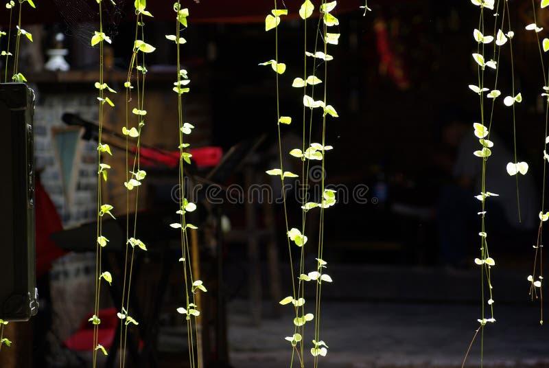 rośliny lekki reversible zdjęcia royalty free