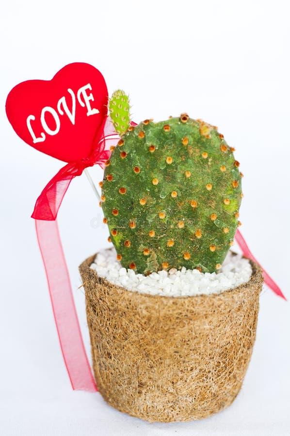 Rośliny miłość zdjęcia stock