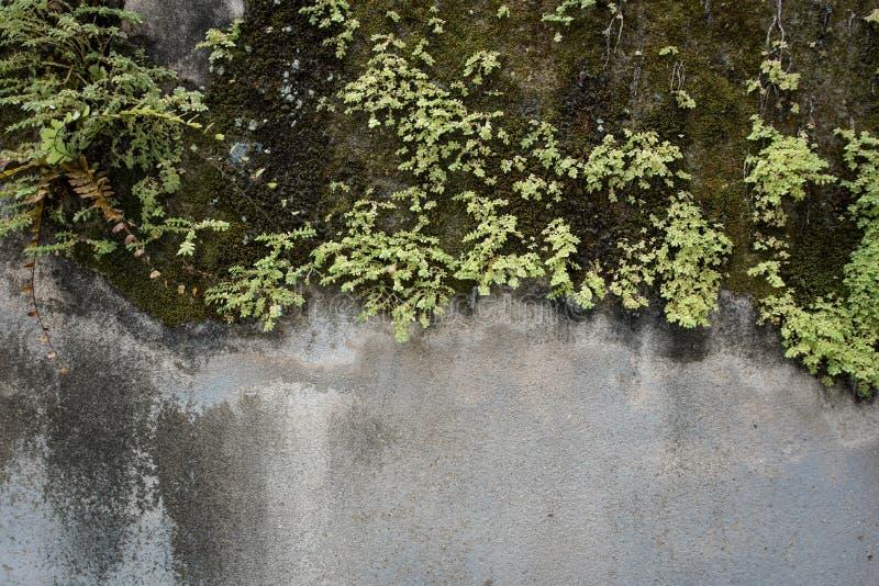 Rośliny na betonowej ścianie obraz royalty free