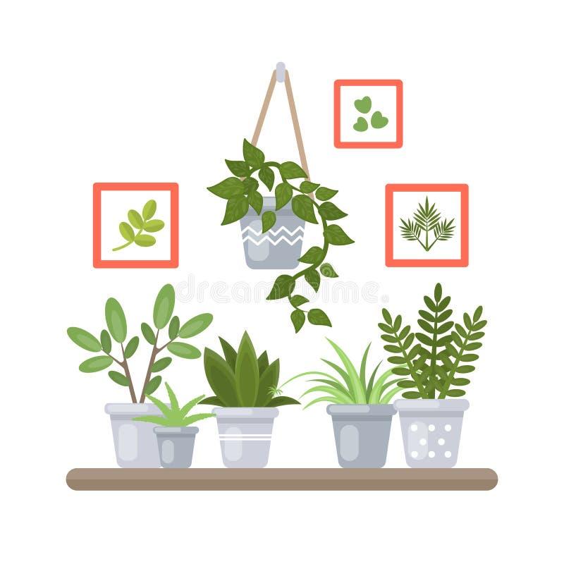 Rośliny na półce ilustracji