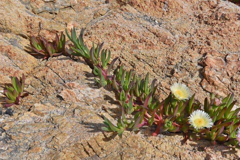 Rośliny na powierzchni kamień fotografia royalty free