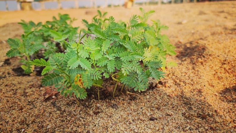 Rośliny narastająca fotografia zdjęcie stock