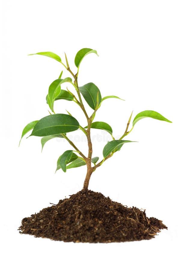 Rośliny nowy życie obraz royalty free