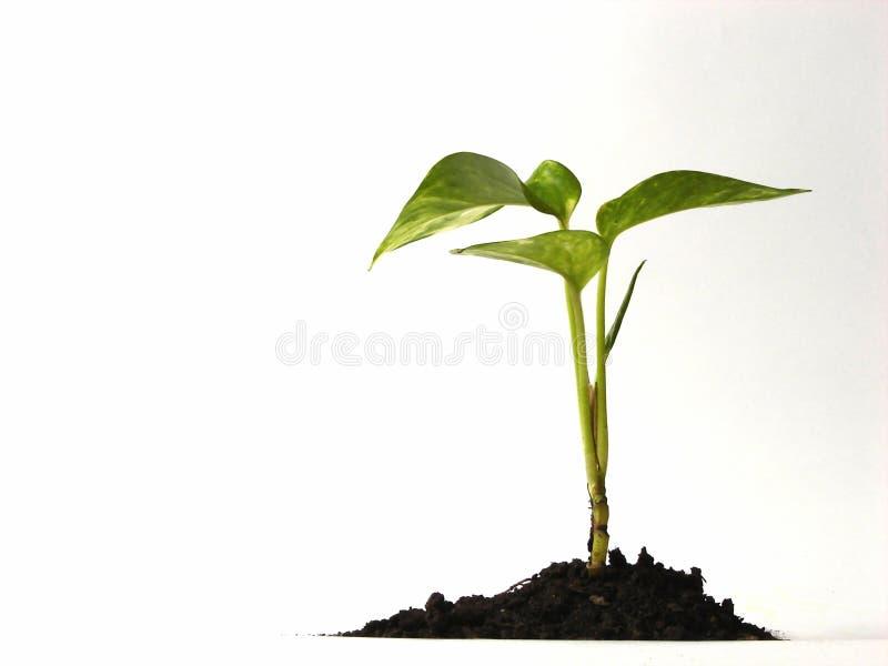 rośliny odizolowana zdjęcia stock