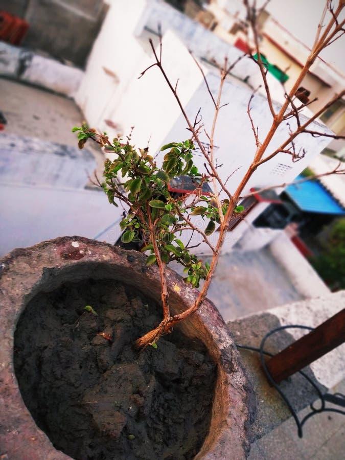 Rośliny pic obraz royalty free