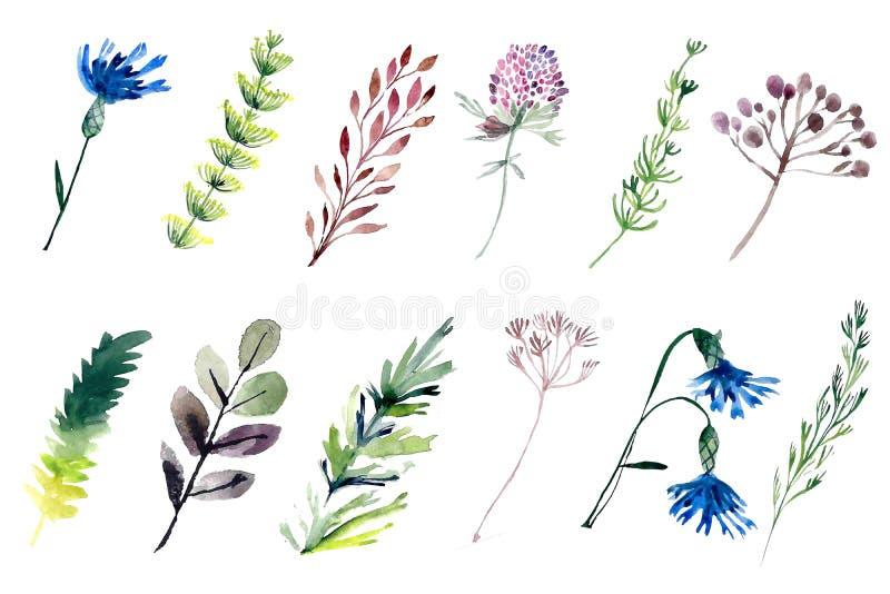 Rośliny polowe w kolorze wodnym Ilustracja zestawu kwiatów ilustracja wektor