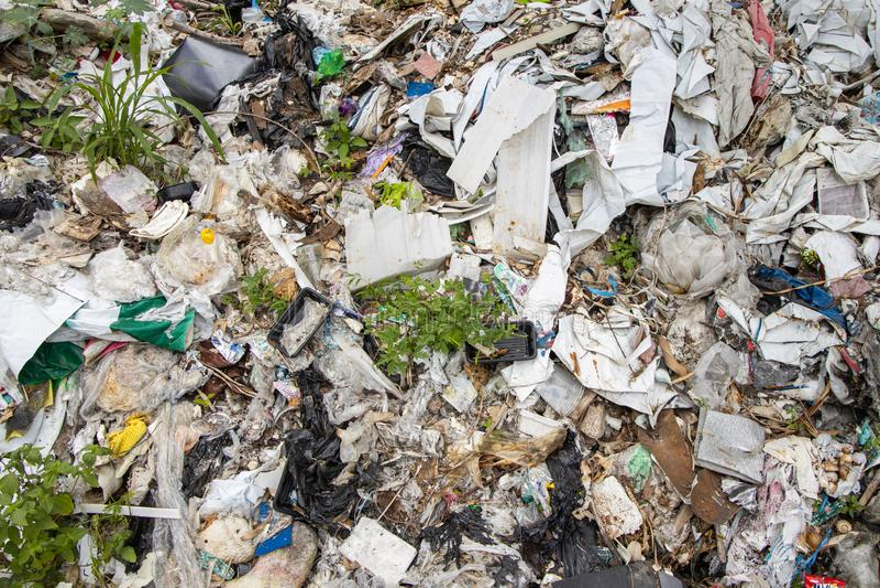 Rośliny próbuje rosnąć wśród odpady stosu obraz royalty free