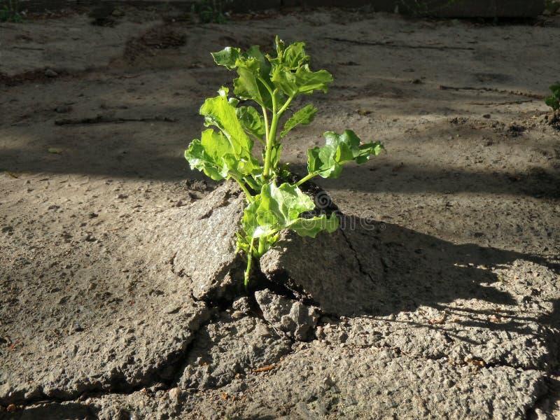 Rośliny próbuje ximpx - przez ludzkich pokryw obraz royalty free