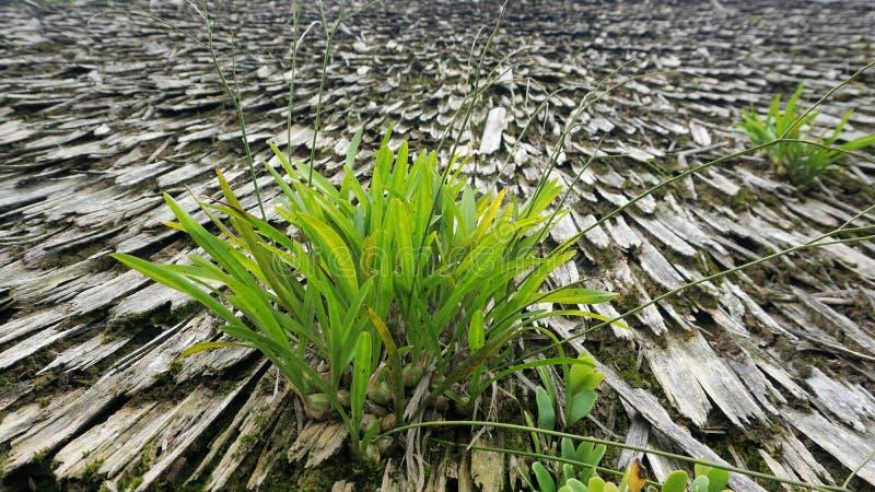Rośliny r naturalnie na wietrzeć starych drewnianych płytkach fotografia royalty free