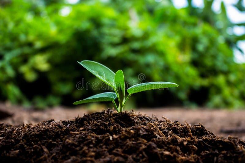 Rośliny r w kiełkowanie sekwenci na żyznej ziemi z natu zdjęcie royalty free
