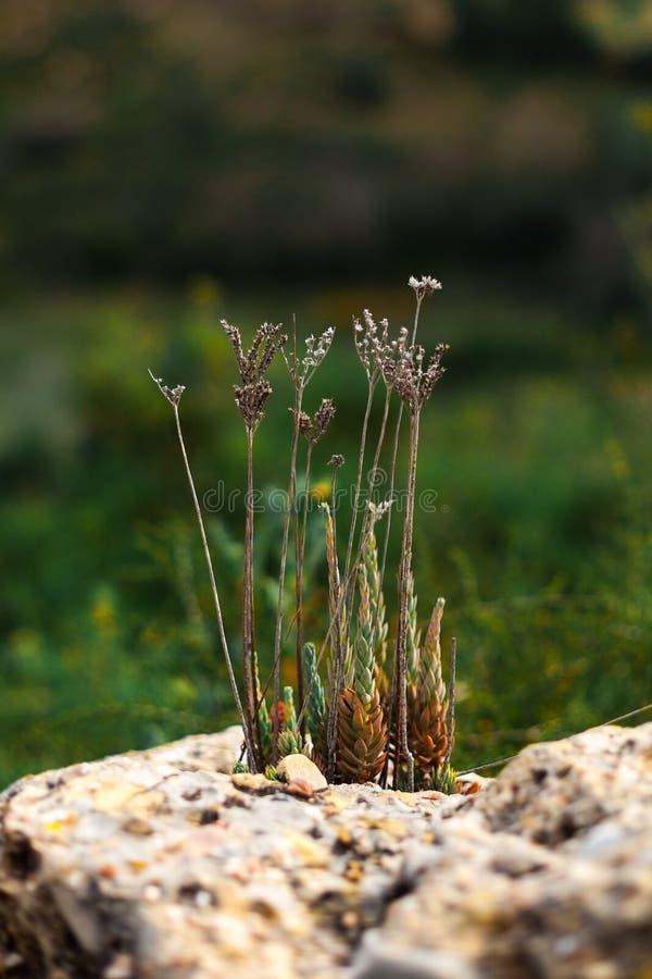 Rośliny r w skale zdjęcia royalty free