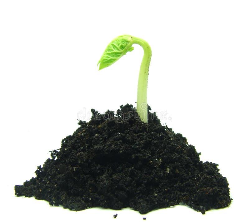 rośliny TARGET680_0_ ziemia obraz stock