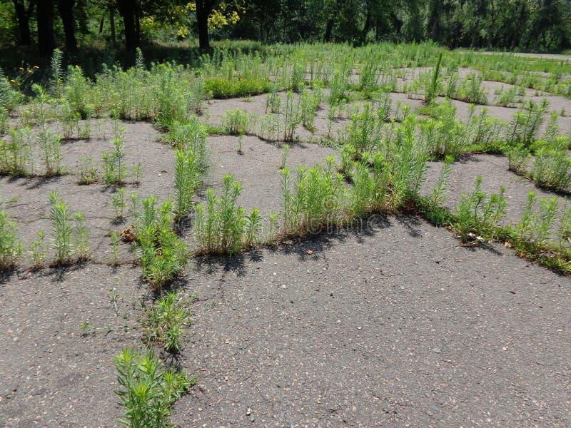 Rośliny w drodze fotografia stock