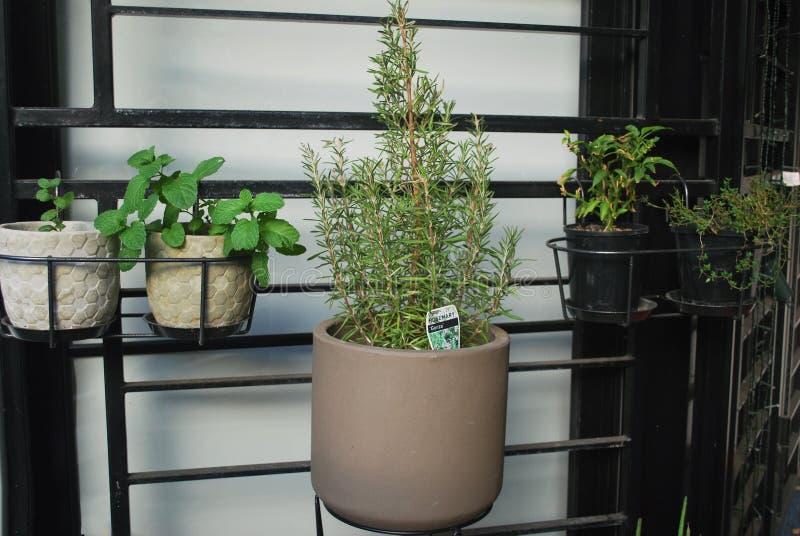 Rośliny w garnkach dołączających siatka na domowym patiu obraz stock