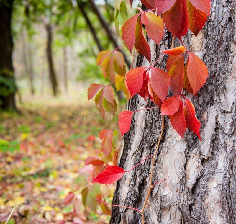 Rośliny w parku fotografia stock