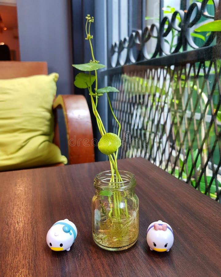 Rośliny w szklanej butelki domu dekoracji obraz stock