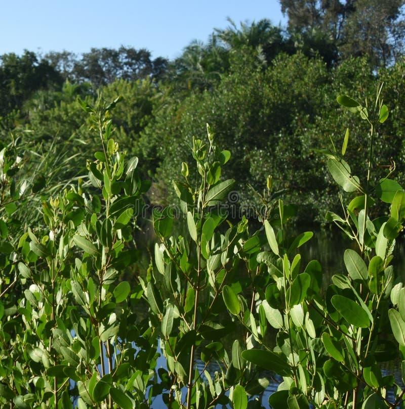 Rośliny w zatoczce błyszczą w świetle słonecznym fotografia stock