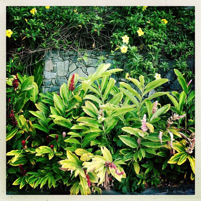 Rośliny z zielonymi liśćmi obrazy stock