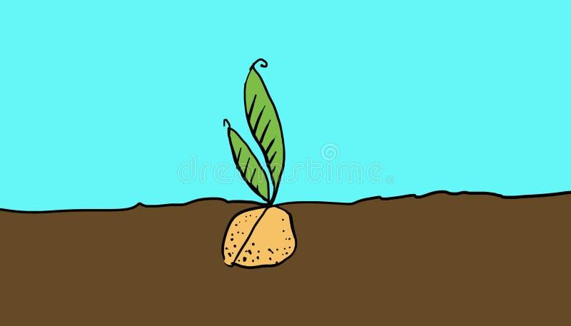 rośliny ziarno ilustracji