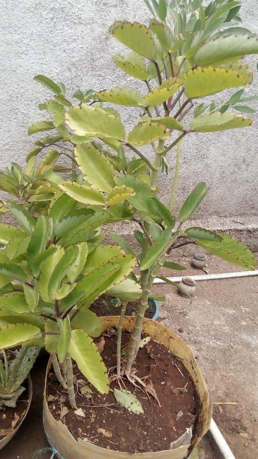 Rośliny zieleń zdjęcie stock