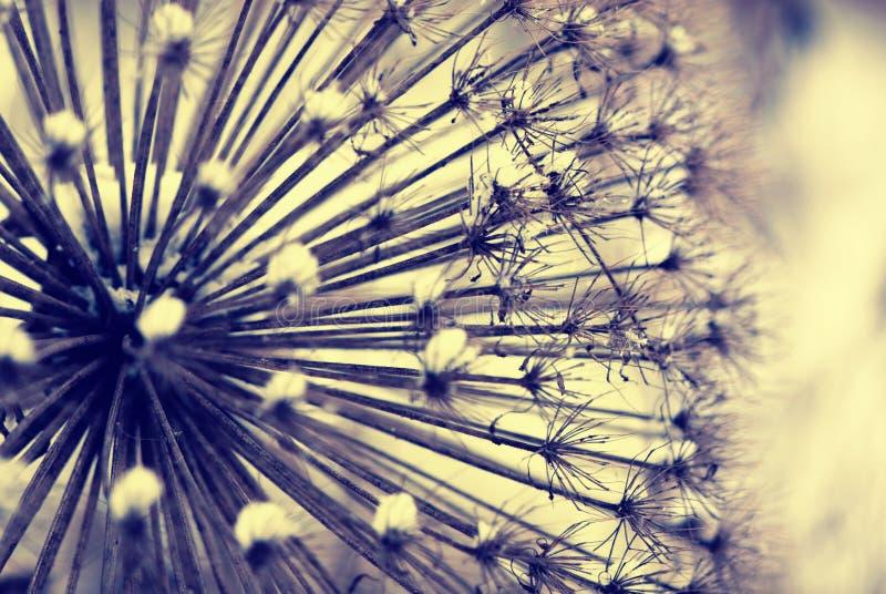 rośliny zima zdjęcie stock